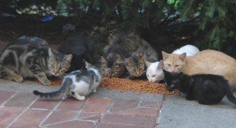 Husker Cats Assist Feral Felines Through Heat Nebraska