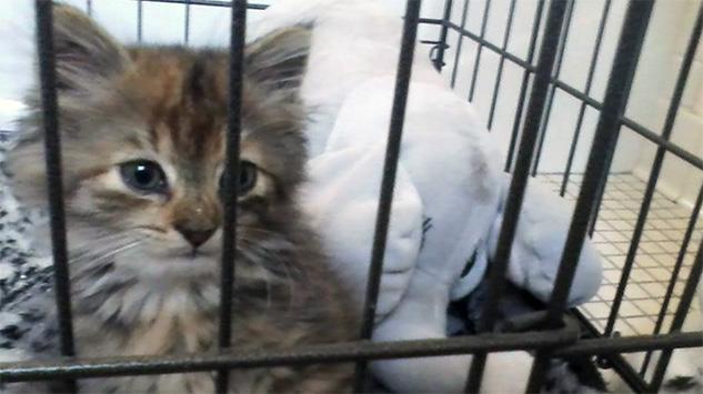 annual capital shower events involved ne kittens society lincoln kitten humane get