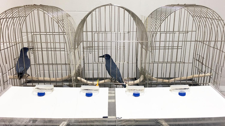 Researchers establish link between hormone, generosity in birds ...