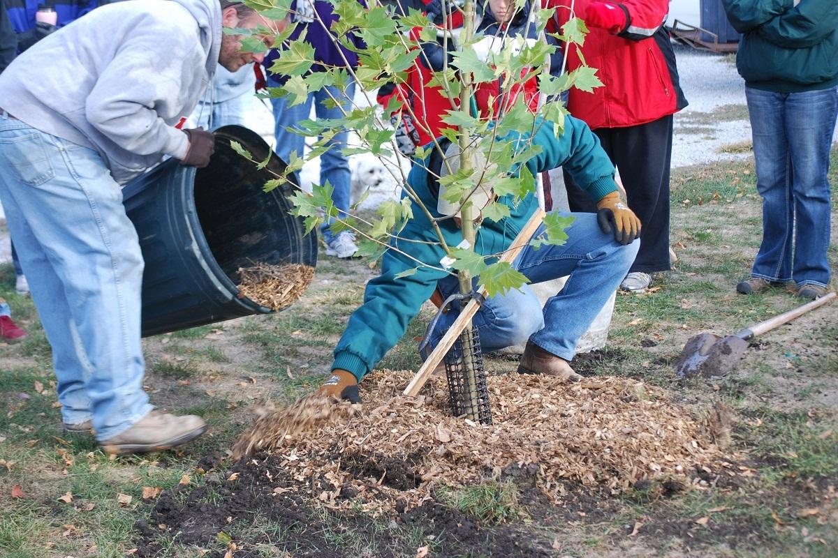 Nebraskans urged to plant trees on Arbor Day | Nebraska ...