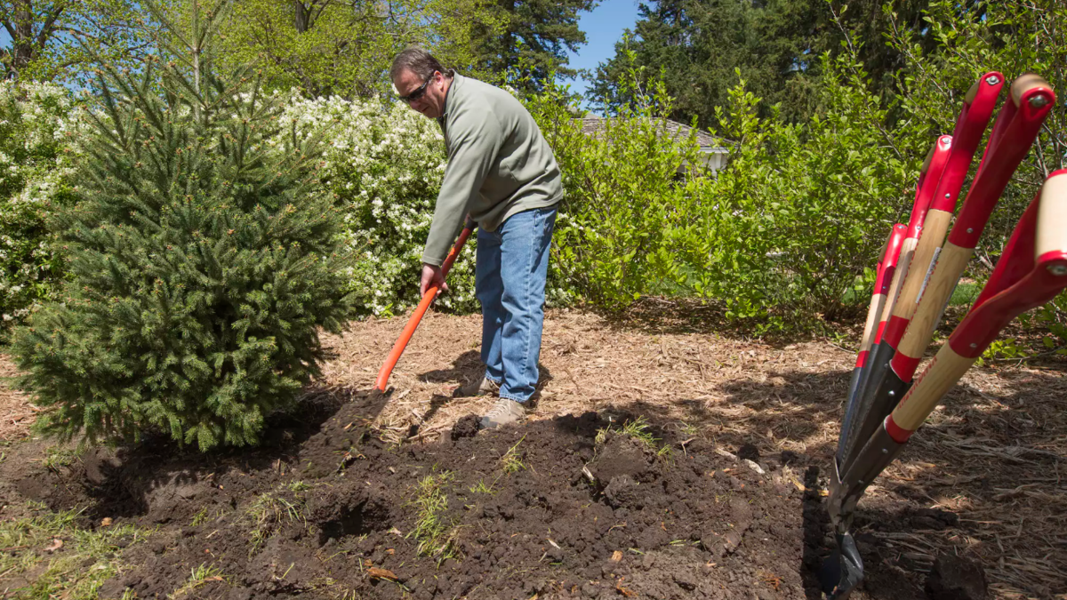 Arbor Day activities feature tree plantings, live broadcasts