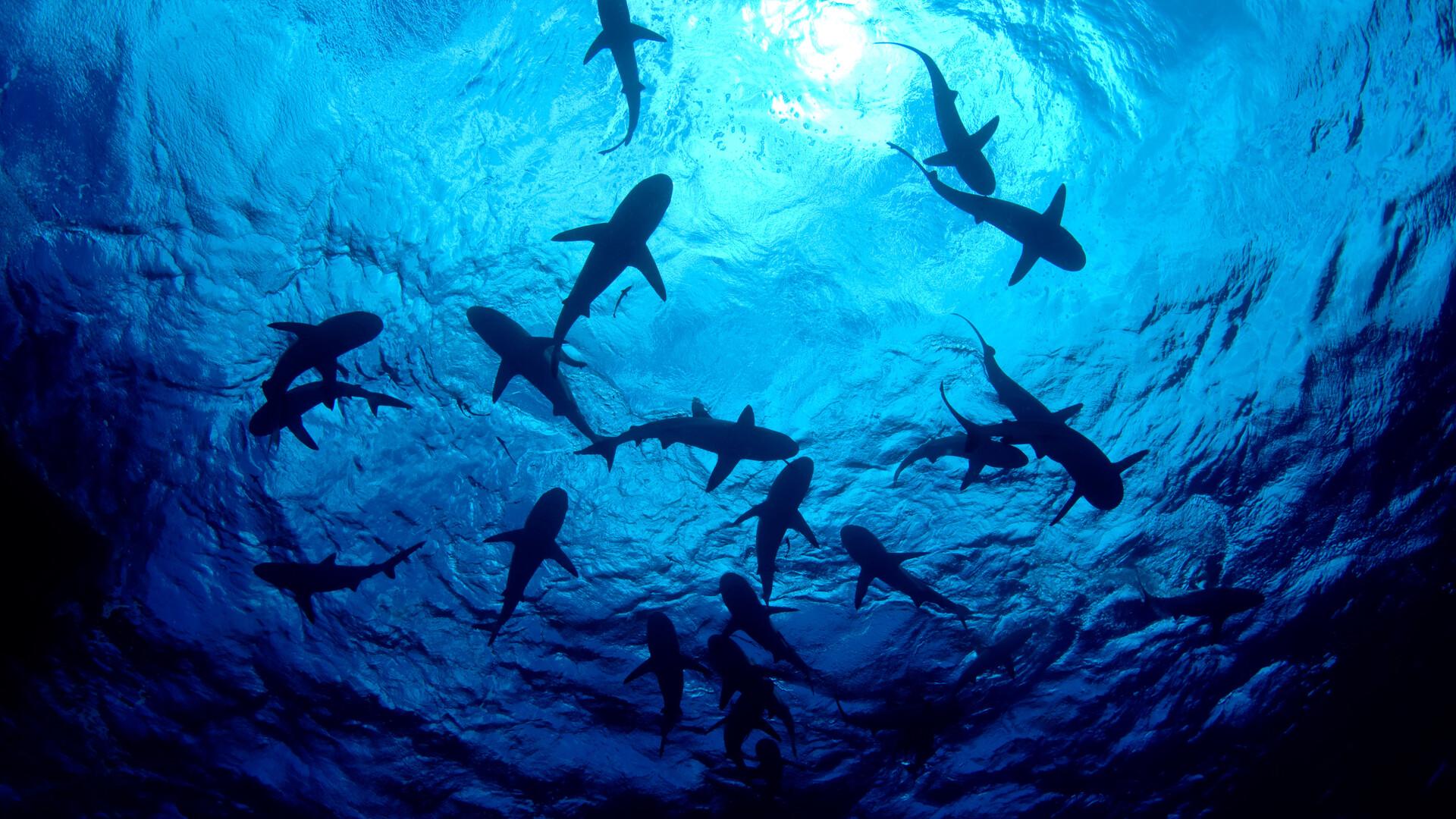 Welcome to Shark Week — Nebraska style