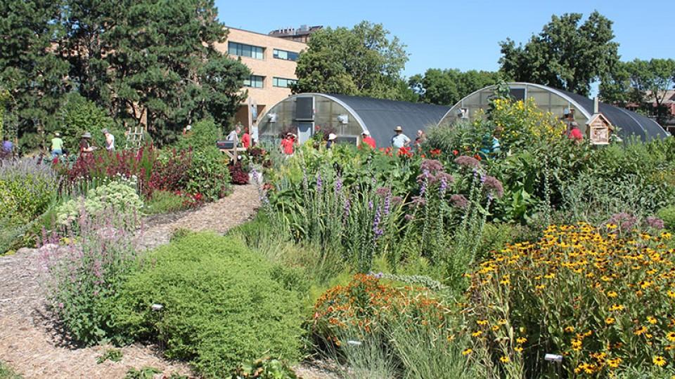 Backyard Farmer garden