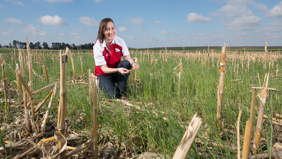 Andrea Basche's research involves the successful incorporation of cover crops into Nebraska cropping systems. Greg Nathan | University Communication