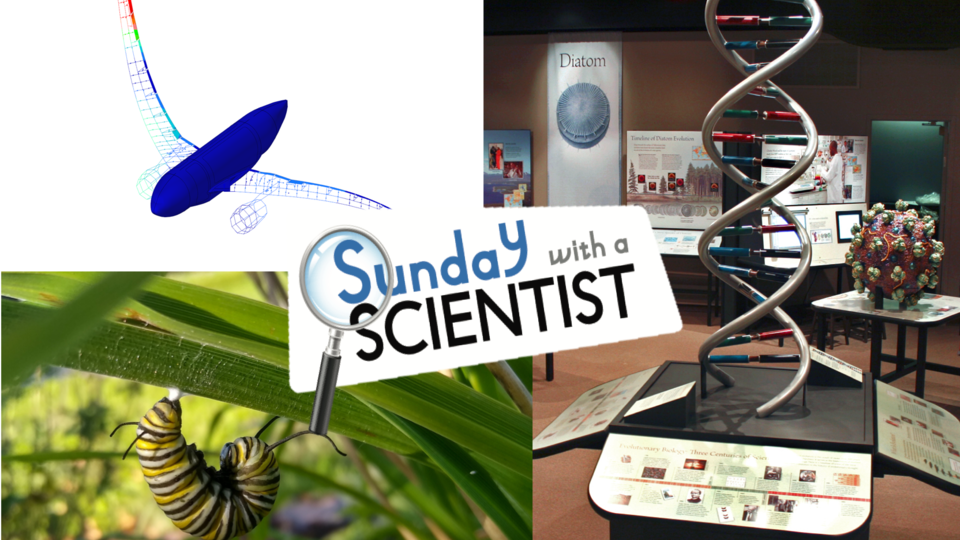 Fall Sunday with a Scientist topics include arthropods, DNA, and aircraft and vibrations.