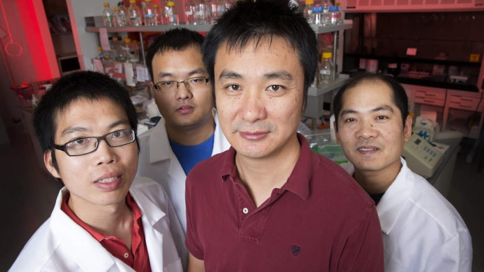 A team of UNL biologists has uncovered important clues about how plant cells regulate microRNAs, a step toward better understanding how crops respond to stress, such as droughts. The researchers include (from left) Guodong Ren, research assistant professor; Meng Xie, graduate research assistant; Bin Yu, assistant professor of biological sciences; and Shuxin Zhang, post-doctoral research associate.