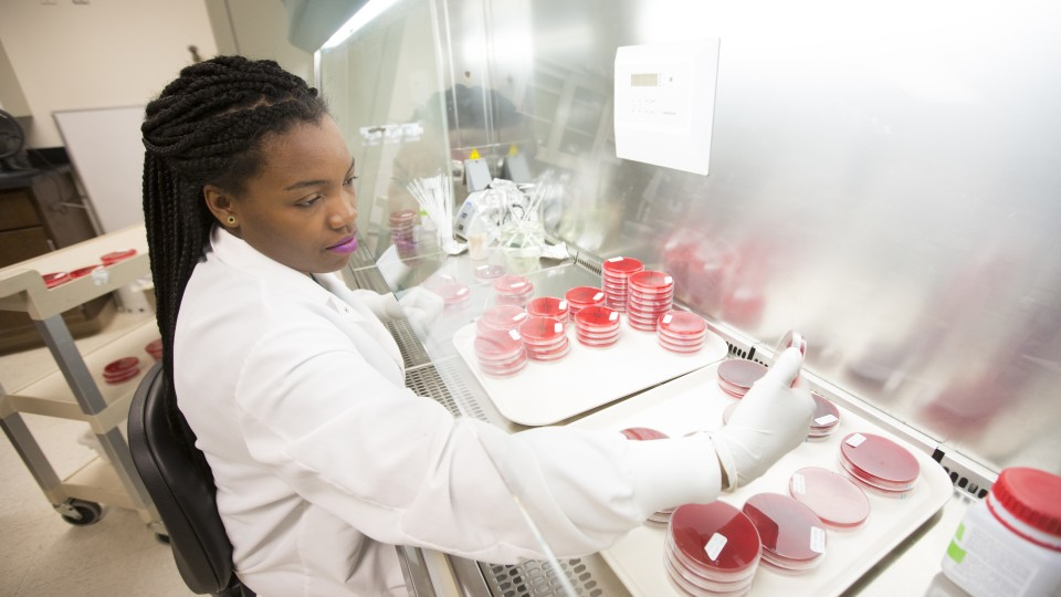 Kenda Jackson examines blood agar plates in studies that tested the effect of certain antibiotics on detection of Shiga toxin-producing E. coli bacteria in cattle. Jackson recently graduated from Tuskegee University in Alabama. She was an intern in the Nebraska laboratory of Rodney A. Moxley as part of a USDA Coordinated Agricultural Project grant investigating harmful E. coli strains.