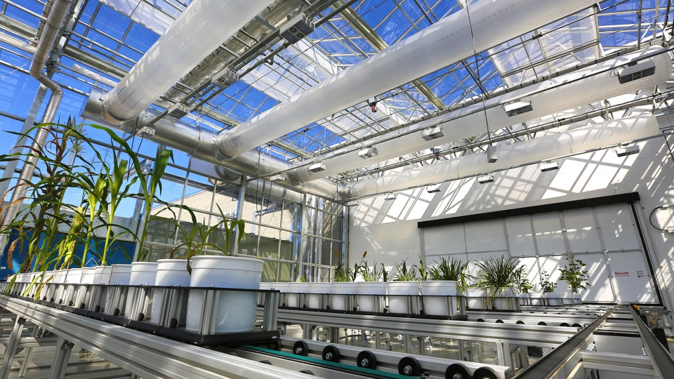 A preview of the Nebraska Innovation Campus greenhouse and unique phenotyping system begins at 2:30 p.m. May 18.