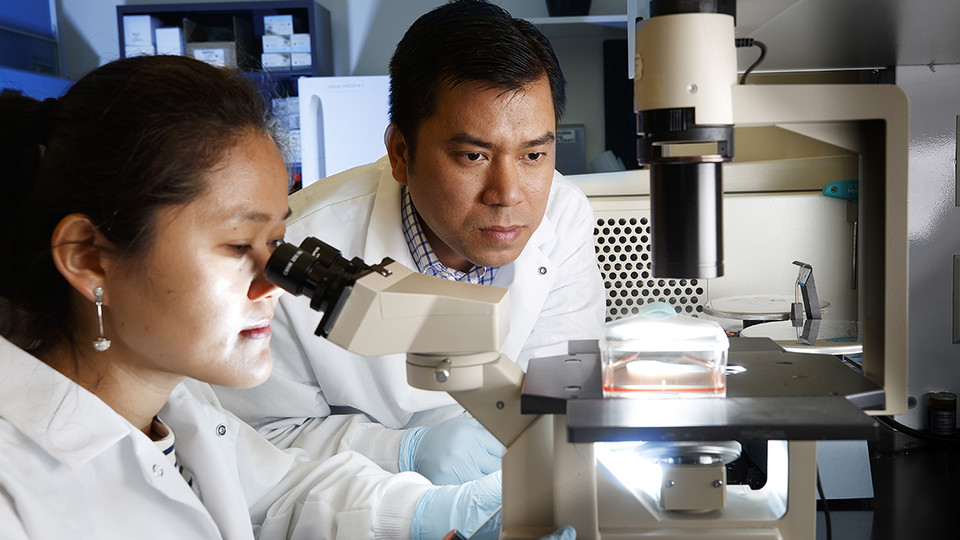 Nebraska researchers Haiyan Sun (left) and Hiep Vu have developed a vaccine that could help protect swine from a deadly virus.