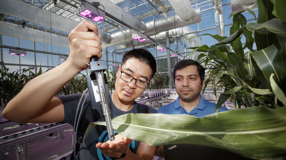 Researchers and students of James Schnable, assistant professor of agronomy and horticulture, take measurements of the growth and health of plants in the Greenhouse Innovation Center at Nebraska Innovation Campus. Schnable is part of a $3.9 million NSF-funded project that aims to develop crops that more efficiently use fertilizer.