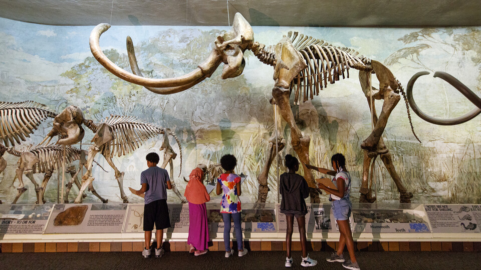 Visitors stand in awe of the mammoth skeleton in Elephant Hall in 2018.