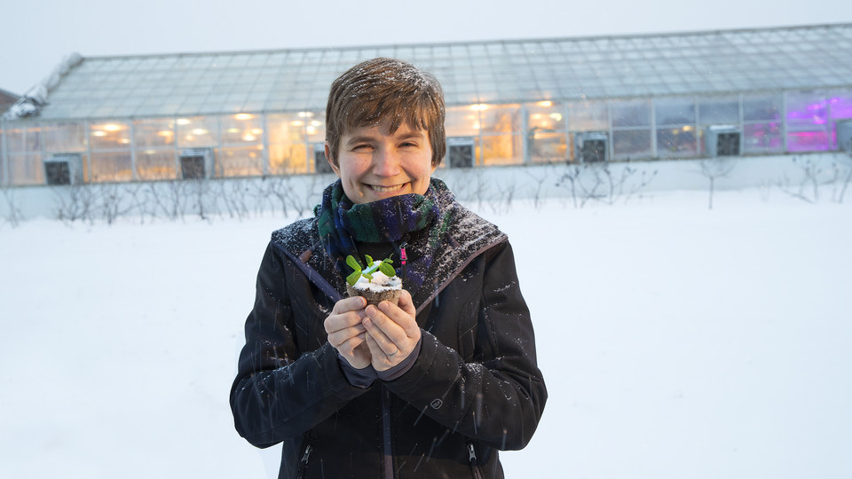 Rebecca Roston, assistant professor of biochemistry, holds a pea plant outside the Beadle Hall greenhouses.  Roston, who recently earned a National Science Foundation CAREER award, is studying how more than 30 species of plants respond to freezing.
