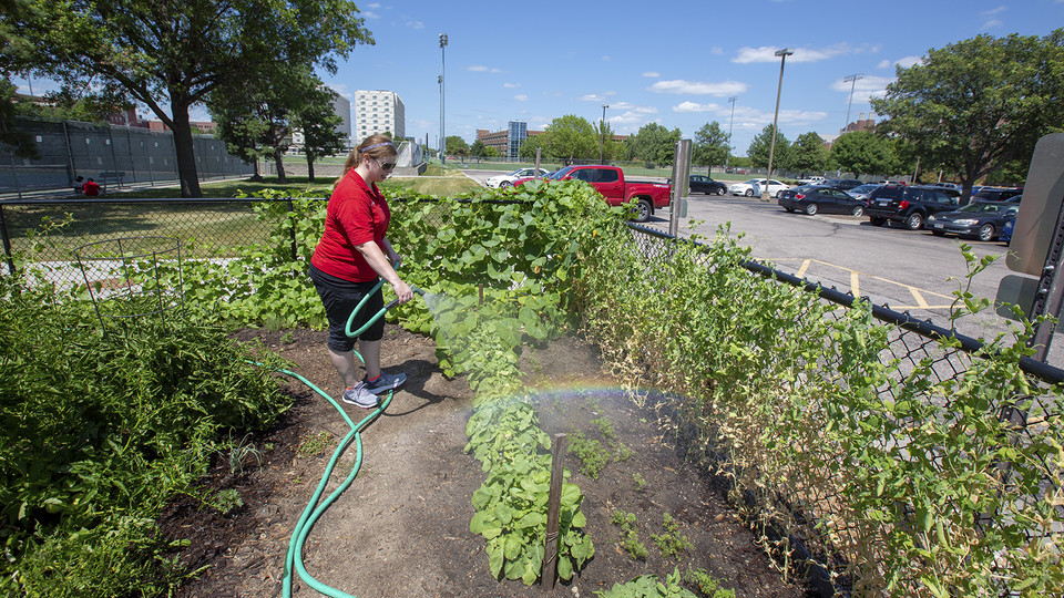 Megan Thomazin waters the Willa Cather Dining Center garden. University housing employees use the first-year space to grow fresh vegetables and herbs that are served in the dining facility.