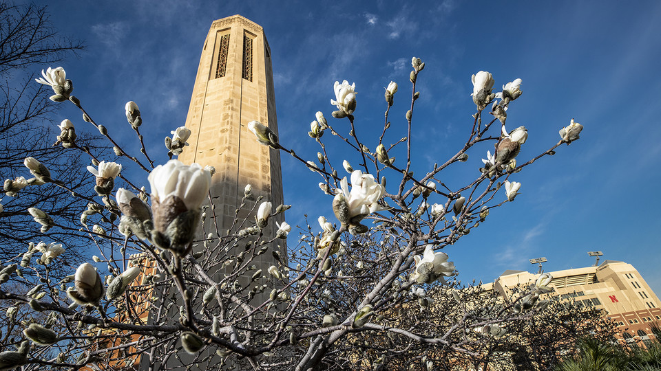Magnolia blooms near Mueller Tower on the University of Nebraska–Lincoln's City Campus. Huskers seeking to give hope by giving back to the campus and greater-Lincoln community have a variety of options.
