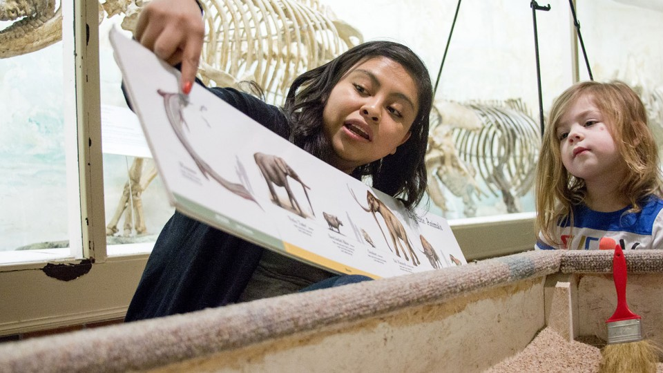 A Morrill Hall volunteer explains various species found as part of a simulated fossil dig to a young visitor. The museum will host a variety of hands-on activities during Museum Day Live! on March 12.