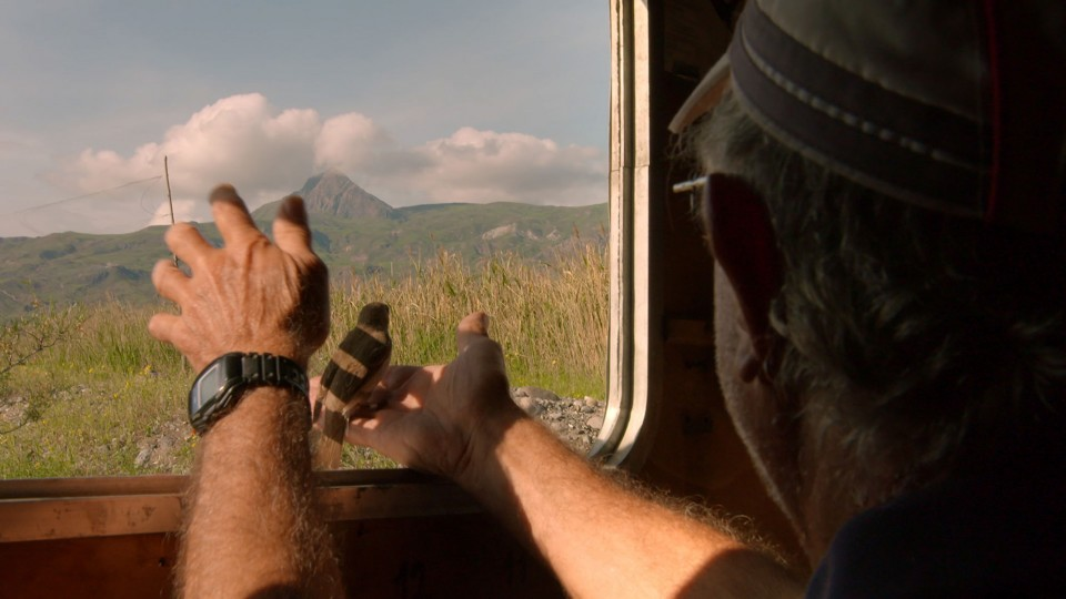 In eastern Turkey's Aras River wetland, volunteer Michael Ford releases a songbird back into the wild.
