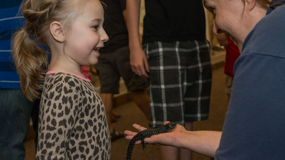 "A young visitor learns more about salamanders during a live animal encounter with the Nebraska Game and Parks Commission's Project WILD during ""Archie's Late Night Party"" in 2015 at Morrill Hall."