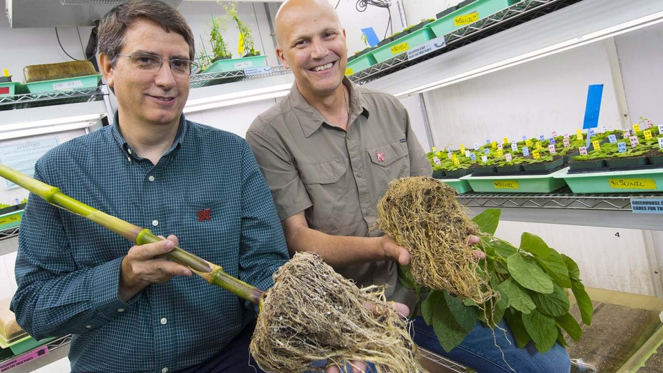 Edgar Cahoon, left, professor of biochemistry and director of UNL's Center for Plant Science Innovation, and James Alfano, professor of plant pathology at UNL, will lead a $20 million, Nebraska-based research effort to improve crop productivity.