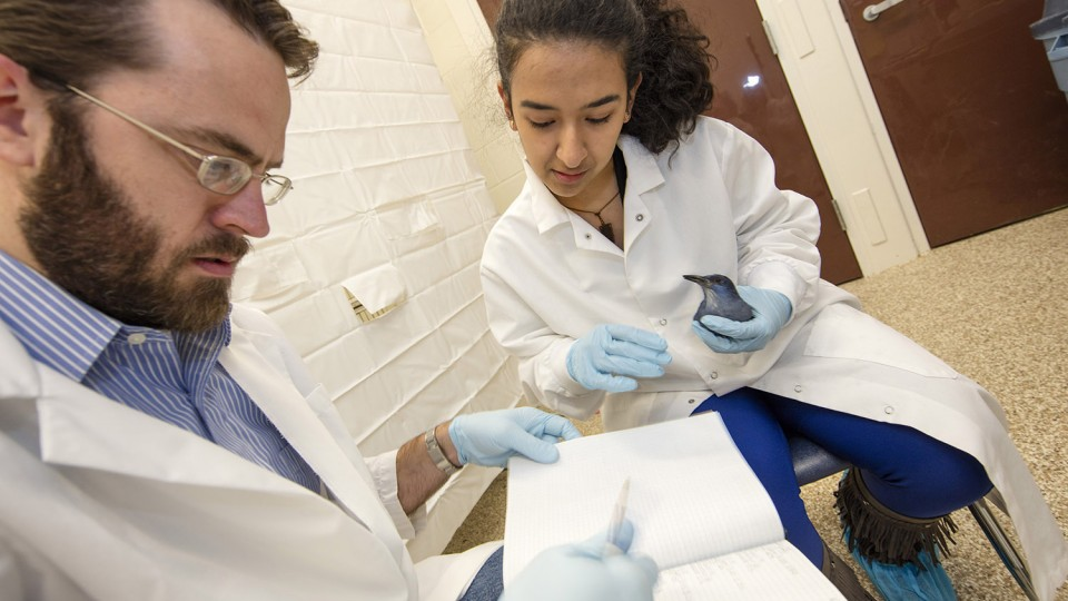 325 Students Receive Stipends For Research Projects Nebraska Today