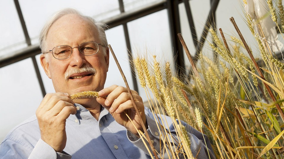 Stephen Baenziger, professor of agronomy and horticulture at the University of Nebraska-Lincoln will lead a three-year, $975,000 research project focused on the development of hybrid wheat.