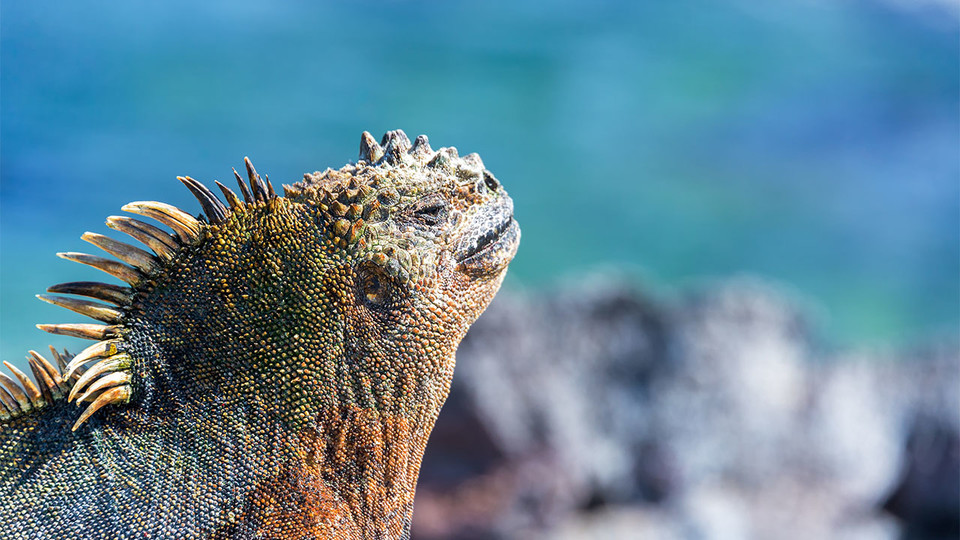 "Morrill Hall will host the traveling exhibition ""Galapagos"" from March 3 through Aug. 6."