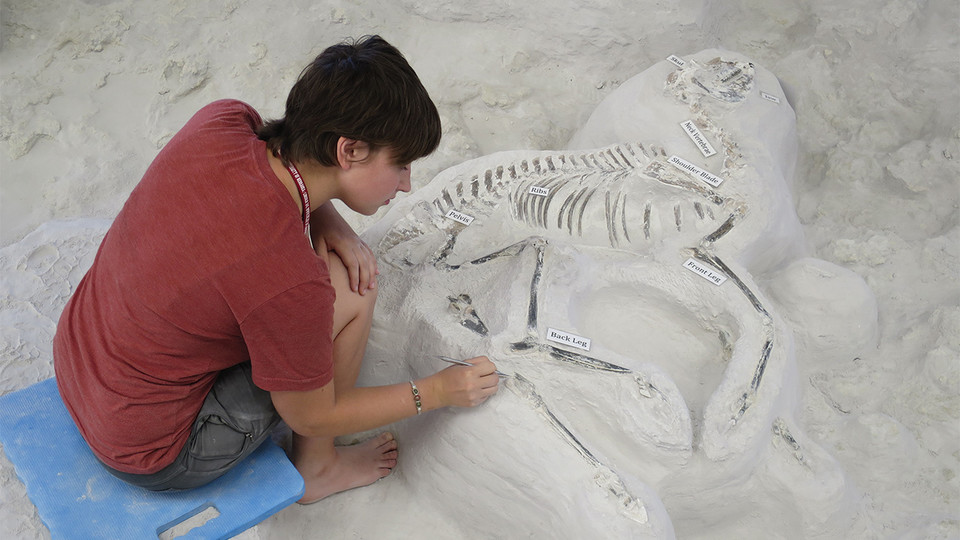 Paleontology intern Mikayla Struble works on a Pseudhipparion fossil at Ashfall Fossil Beds State Historical Park in 2016.
