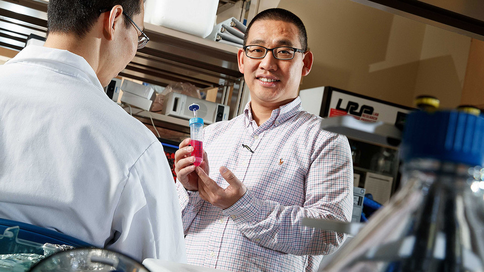Sunday with a Scientist to explore regenerative medicine