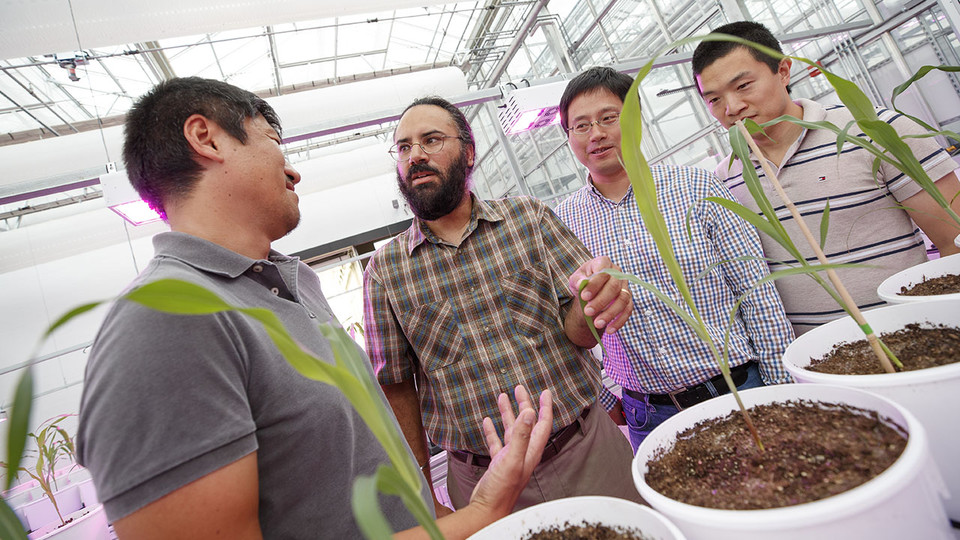 Harkamal Walia checks the progress of wheat growing in the Lemna Tech High Throughput Phenotyping facility at the Greenhouse Innovation Center on Nebraska Innovation Campus. He is discussing the plant with other researchers on the grant. From left is Toshihiro Obata, Hongfeng Yu and Qi Zhang. Not pictured are researchers Chi Zhang and Gota Morota.