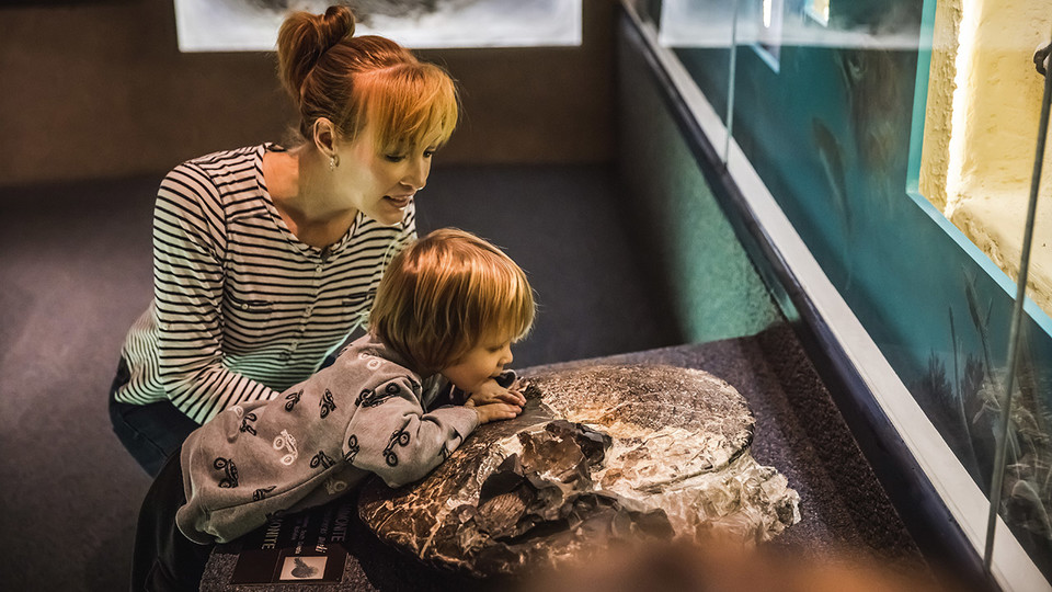 The University of Nebraska State Museum at Morrill Hall will offer free admission Sept. 22 to visitors presenting a Museum Day Live! ticket.