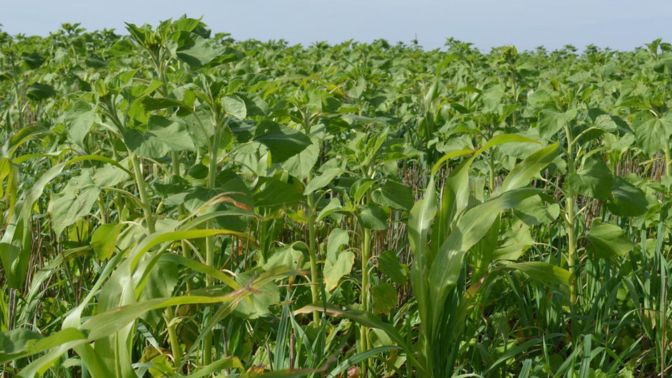 The Nebraska Cover Crop and Soil Health Conference Feb. 14 offers a slate of experts, including experienced growers from Nebraska.