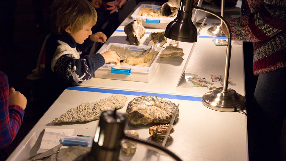 Visitors interact with real museum specimens during a previous Dinosaurs and Disasters event. The 2019 event is 9:30 a.m. to 4:30 p.m. Feb. 2 at Morrill Hall.