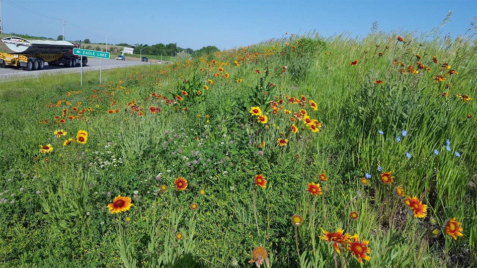 In addition to visual aesthetics, the main reason the Nebraska Department of Transportation seeds roadsides is to establish vegetation cover and prevent erosion, which is required by the federal government.
