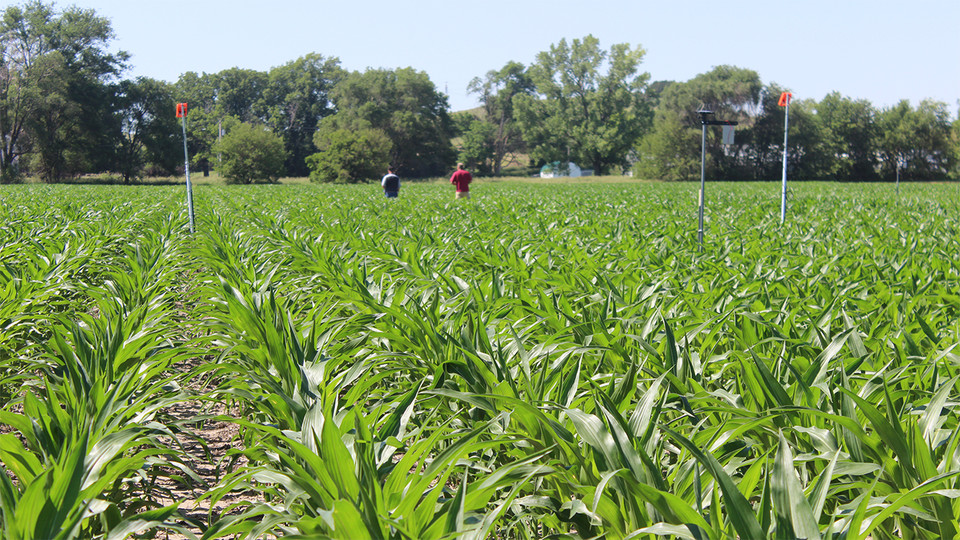 Testing Ag Performance Solutions participants inspect their subsurface drip-irrigated corn plots during the 2019 Field Day. TAPS has earned an $850,000 Conservation Innovation Grant award from the U.S. Department of Agriculture's Natural Resource Conservation Service.