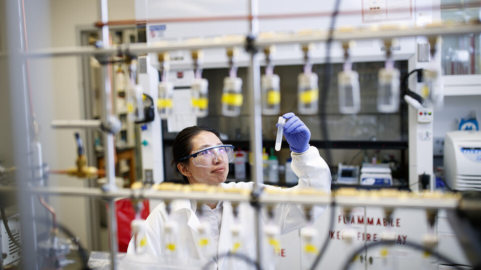 A Husker research team led by Limei Zhang, assistant professor of biochemistry, has been awarded a five-year, $1.8 million grant to study the novel mechanisms of iron-sulfur proteins that play multifaceted roles in stress response and antibiotic resistance.