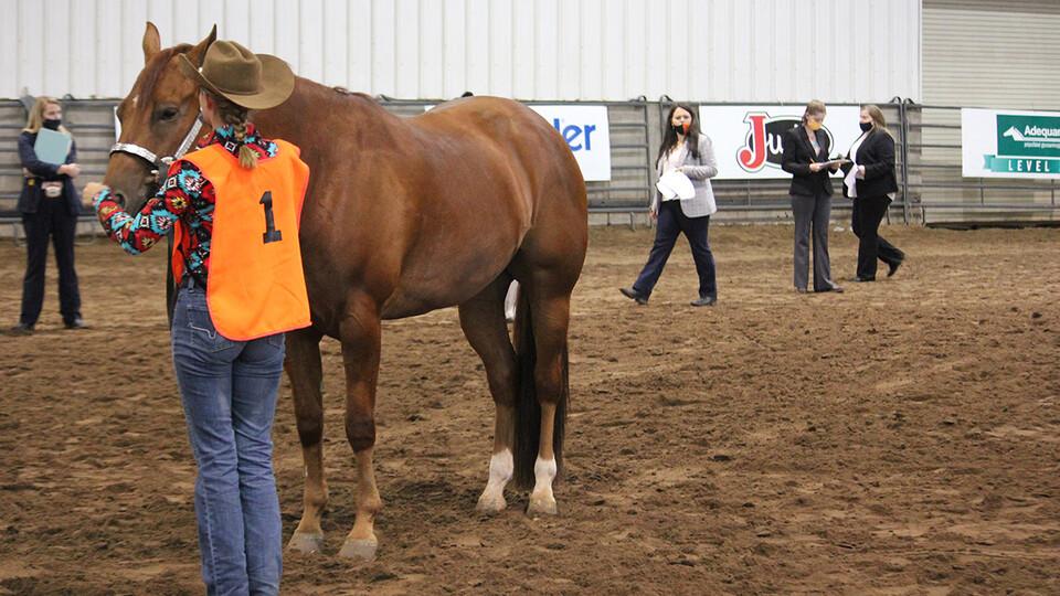 University of Nebraska–Lincoln Horse Judging Team members judge a horse at the American Quarter Horse Association World Show contest.