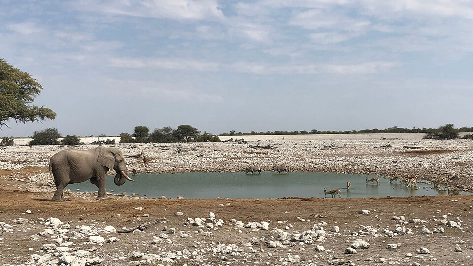 Former Gilman Scholar Lexy Polivanov captured the activity at a watering hole in Namibia during her education abroad program in summer 2019.