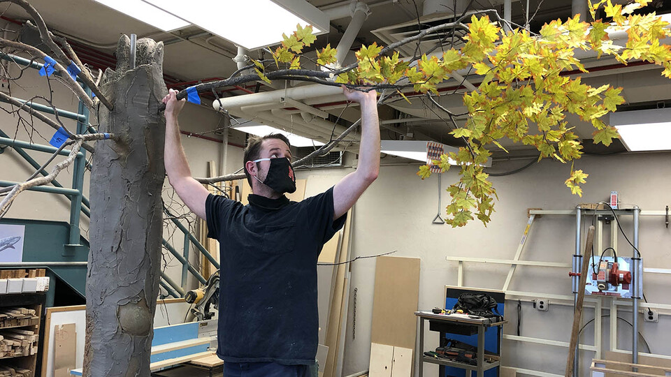 """Zak Kathol, exhibit fabrication coordinator at the NU State Museum, hangs a branch on a fake tree that will be a centerpiece of the """"Poop & Paws"""" exhibit."""