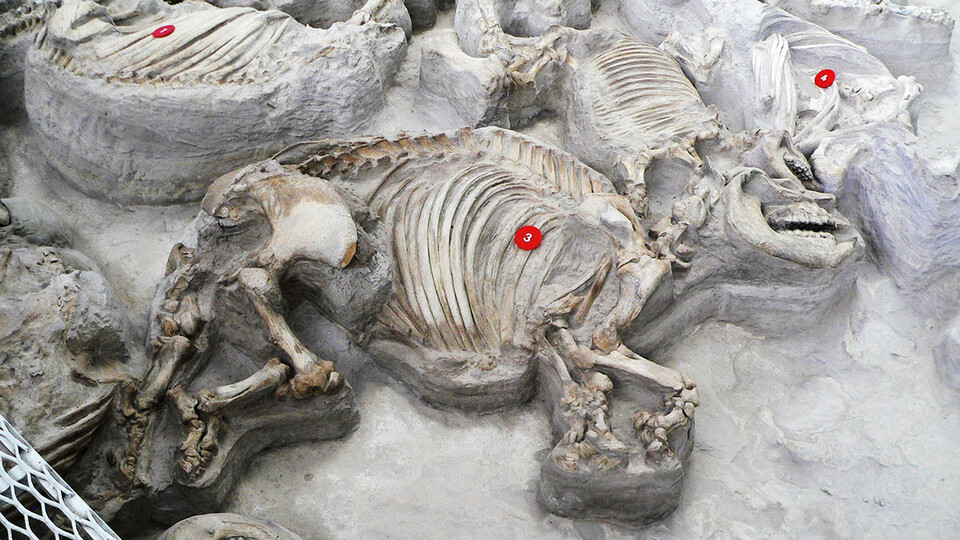 Ashfall Fossil Beds State Historical Park near Royal will open to the public May 1. Hours will be 9:30 a.m. to 4:30 p.m. Wednesday through Sunday.
