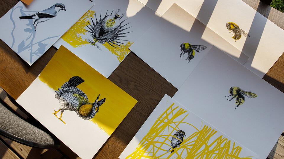 Bird and bee artwork by Sarah Kaizar sits on a desk at Cedar Point Biological Station.
