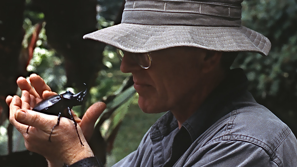 Nebraska's Brett Ratcliffe examines a beetle during a 1998 research trip to Ecuador. Ratcliffe has identified more than 200 new species of insects in his 50-year career at Nebraska.
