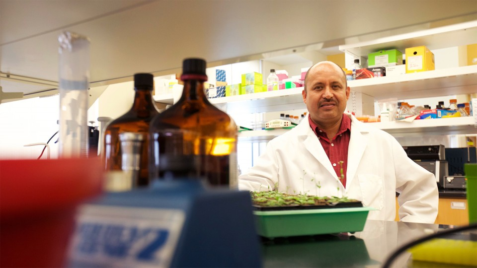 Hernan Garcia-Ruiz, assistant professor of plant pathology, has earned a $1.3 million grant from the National Institutes of Health to study how plants identify viral RNAs that allow a virus to replicate.