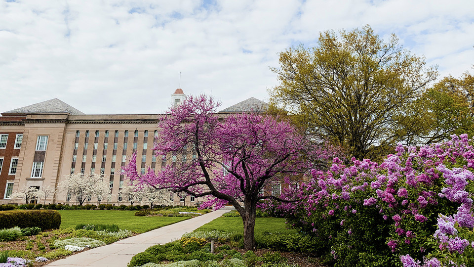 Spring blooms light up the south facade of Nebraska's Love Library.