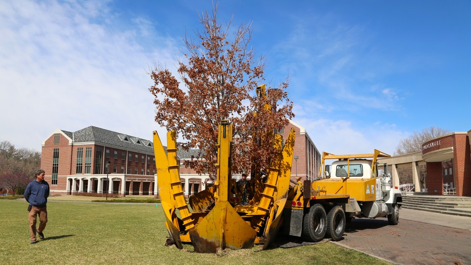 A Table Rock sugar maple is put into place in the greenspace west of Selleck Hall on UNL's City Campus on March 26. The tree was one of nearly 20 recently moved due to campus construction projects.