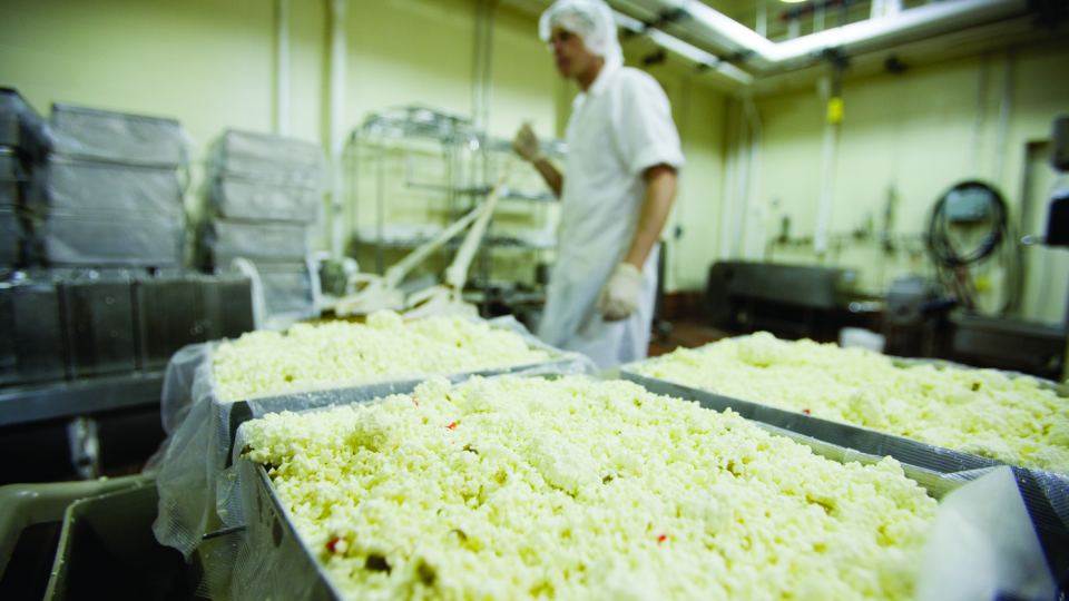 A UNL employee makes cheese in the Dairy Store on East Campus.