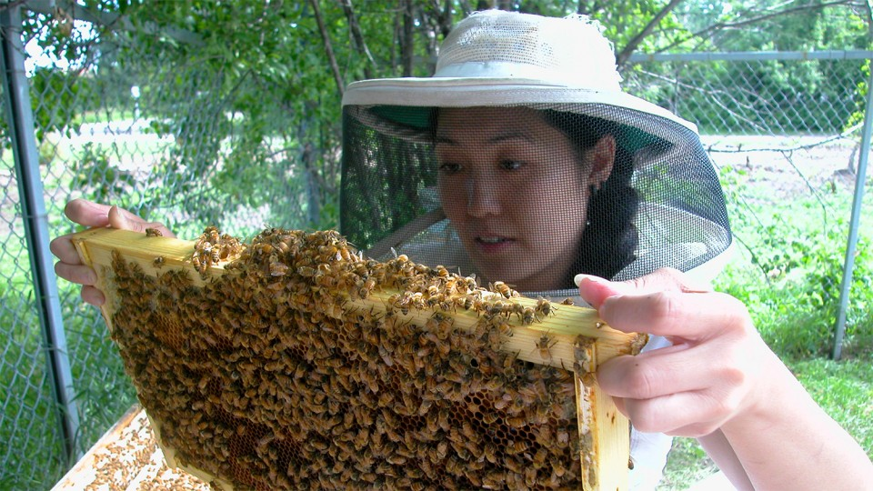 Judy Wu-Smart, an entomologist at the University of Nebraska-Lincoln, has co-authored new research suggesting that a popular class of nicotine-based insecticides have substantial effects on honey bee colonies.