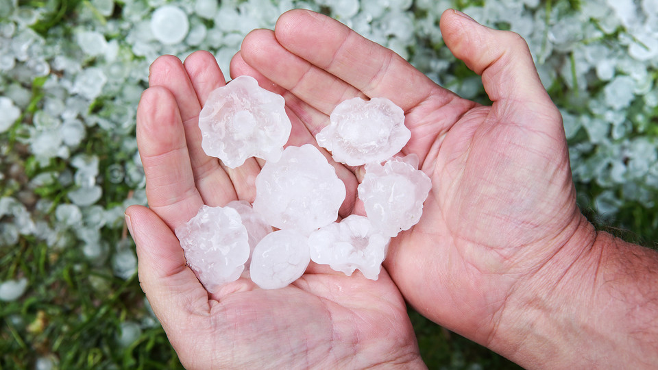 In Nebraska, hail-producing storms are common during the planting and growing seasons. A new online resource from Nebraska Extension provides information on what to do in the event of hail damage.
