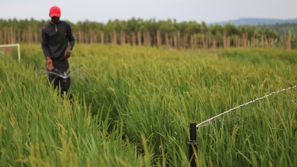 A farmer in Rwanda works with a sprinkler in his field.