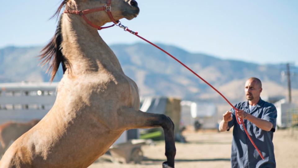 "Matthias Schoenaerts stars in ""The Mustang"""