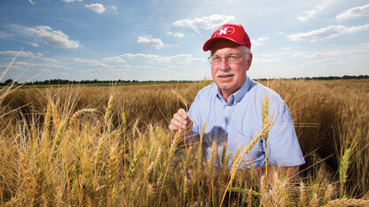 Baenziger awarded $650,000 for hybrid wheat research