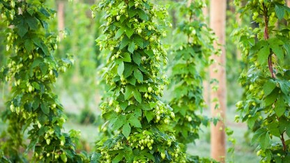 Hops workshop scheduled for July 22